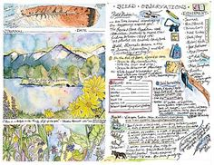 nature journal inspiration