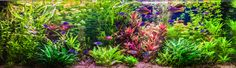 How to adjust the pH in your aquarium. pH can have lethal consequences for your aquarium fish. Safely increase or decrease the pH in your fish tank.