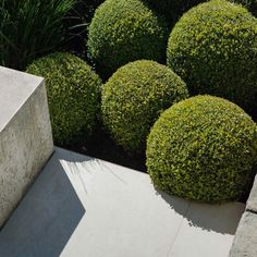 """Secret Gardens on Instagram: """"Stone, concrete, Buxus balls and a touch of Lomandra 'Tanika' for added texture.  Photographer: Nicholas Watt"""" Decor Interior Design, Interior Decorating, Lomandra, Buxus, Exterior Design, Garden Landscaping, Stepping Stones, Landscape Design, Thinking Of You"""