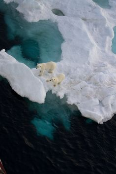 Mother polar bear and cub on sea ice