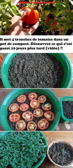 Il met 4 tranches de tomates dans un pot de compost. Découvrez ce qui s'est passé 10 jours plus tard (vidéo) !!