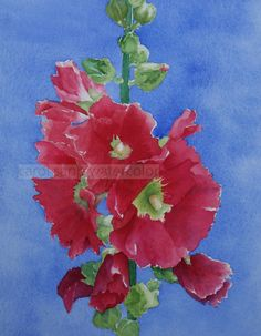 red hollyhocks watercolor flower painting archival print 8 x 10 via Etsy