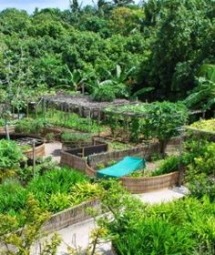 Tips For A No Weeds and No Bugs Urban Permaculture Garden - To produce delicious fruits and vegetables in an urban permaculture garden, all starts with the soil preparation. This easy method helps minimize weeding and requires minimal watering.