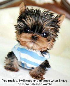 teacup pup ♥