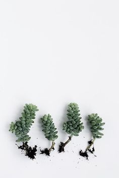 Succulents from Cereal Magazine Volume 6