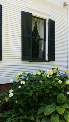 Pretty white hydrangea side of house