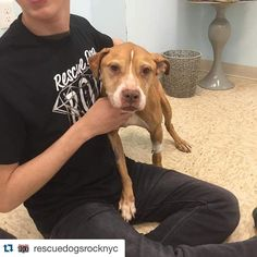 10 yrs old and tied outside and abandoned #Repost @rescuedogsrocknyc with @repostapp.  Sienna is still on an IV receiving fluids undergoing testing and resting comfortably at our vet partner... We have learned that sadly Sienna was tied to a pole in the Bronx and abandoned... Her finder who called the City shelter could not keep her & Sienna was taken away by an Animal Control Officer and brought to the shelter... We do know at some point Sienna was cared for as she is spayed... Sienna holds…