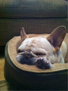 'mushhhh, just mushhhh', Sleeping French Bulldog.
