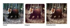 Instagram Filters as Photoshop Actions by @dbox