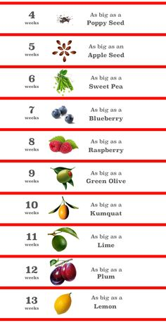a customized fruit and vegetable baby size comparison chart for each
