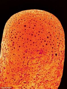 Everyday objects in close-up: items brought to life at a MILLION times magnification.  The tip of an unburnt match.  Picture: Susumu Nishinaga / SPL / Barcroft Media.