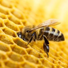 What happen if  the bees disappeared? The Food and Agriculture Organization of the United Nations (FAO) states that there are 100 crop species that provide 90% of food around the world and 71 of these are pollinated by bees. In Europe alone, 84% of the 264 crop species and 4,000 plant varieties exist thanks to pollination by bees.
