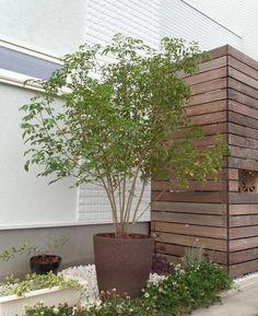 シマトネリコ 株立 約1.5m シンボルツリー Potted Trees, Potted Plants, Trees To Plant, Tree Planting, Exterior Design, Interior And Exterior, Large Plants, Private Garden, Green Garden