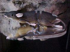Freshwater Fishing Gear