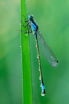 dragonfly #santospiritofirenze