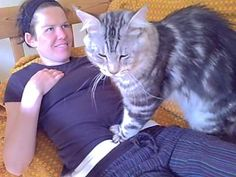 CATZILLA!Gentle giant of the Cat world...well..the domesticated cat world.Lol.