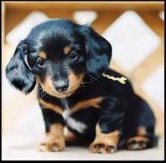 Dotson puppy...... So cute!