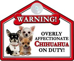 Chihuahua dog gift -  #window / car suction sign - #novelty #warning sign,  View more on the LINK: http://www.zeppy.io/product/gb/2/162228246935/