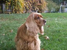 Fall Pet Care Tips for Cats and Dogs - Terri's Team Real Estate, Homes for Sale