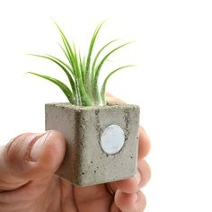 Concrete Mini Cube Magnetic Planter ▪ seems easy enough to diy. This little cutie is made of cast concrete and contains a strong earth magnet so you can put 'em on the fridge or just about anywhere. Each mini cube planter comes with an air plant (really