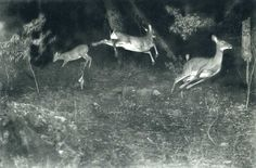 George Shiras, Michigan, 1880's, gelatin silver print from 4x5 negative, rephotographed