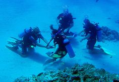 Lots of Dive Courses In Lembongan - http://www.twofishdivers.com/2016/02/lots-of-dive-courses-in-lembongan/?utm_source=PN&utm_medium=Pin+Lembongan&utm_campaign=SNAP%2Bfrom%2BTwo+Fish+Divers