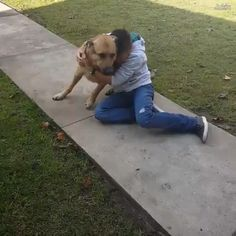 separated and reunited.watch their storys,Funny, Funny Categories Fuunyy dogs reunited with owners always will make us melt. Heartwarming video Source by sylvimanou. Happy Animals, Cute Funny Animals, Cute Baby Animals, Funny Cute, Animals And Pets, Cute Puppies, Cute Dogs, Cute Animal Videos, Mundo Animal