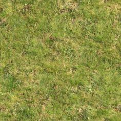 Seamless Green Grass Rough (Maps) | texturise
