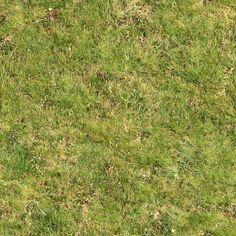 Seamless Green Grass Rough (Maps)   texturise