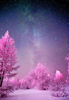 Beautiful Images - a dark bleu sky and pink trees