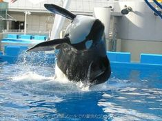 Cute Whales, Orcas, Killer Whales, Dolphins, Animals, Art, Art Background, Animales, Animaux