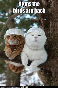 Bird Poop Protection Gear - World's largest collection of cat memes and other animals Animals And Pets, Funny Animals, Cute Animals, Funniest Animals, Animal Jokes, Animal Humour, Cute Kittens, Cats And Kittens, Kittens Meowing