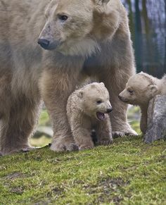 this cub is not in the mood..