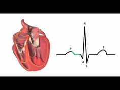 Pretty Informative for a 3 Minute Video! Cardiac conduction system and its relationship with ECG‬