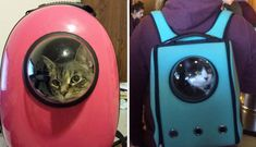 Genius Cat-Pack Lets Your Pet Travel Like a Little Astronaut - Outchemy Diy Cat Toys, Cat Backpack, Cat Carrier, Pet Travel, All About Cats, Space Cat, Cat Furniture, Crazy Cat Lady, Cat Life