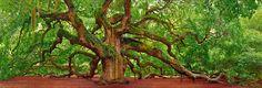 Peter Lik: Tree of Hope