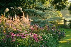Pettifers This Oxfordshire country garden is designed for year-round interest. The Klimt Border with Echinacea Purpurea, Echinops ritro 'Veitchs Blue' and Cornus controversa 'Variegata'. Photographed by Clive Nichols. Flower Garden, Plants, Garden Photography, Outdoor Gardens, Perennials, Garden Inspiration, English Cottage Garden, Summer Garden, Perennial Garden