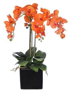 House of Silk Flowers Artificial Triple-Stem Phalaenopsis Orchid Arrangement, Paprika Orange House of Silk Flowers  6 colors
