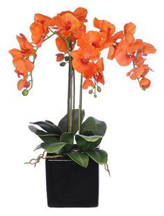 House of Silk Flowers Artificial Triple-Stem Phalaenopsis Orchid Arrangement, Paprika Orange House of Silk Flowers  6 colors