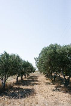 Olive Grove in Kos Island Greece | photography by http://www.elisabettamarzetti.com/