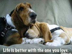 That's for sure! #dogs #pets #BassetHounds facebook.com/sodoggonefunny