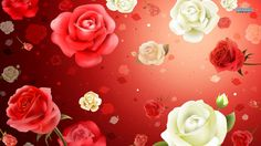 101 Best Red Roses Background Images Red Roses Background Wall