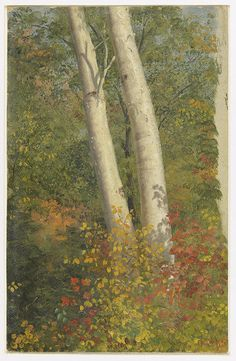 From Cooper Hewitt, Smithsonian Design Museum , Frederic Edwin Church, Birch Trees in Autumn (1865), Oil on paperboard, 305 × 195 in