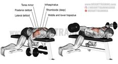 Lying dumbbell onearm rear lateral raise exercise instructions and video is part of Shoulder workout - Target your posterior deltoid with the lying dumbbell onearm rear lateral raise To minimize lateral deltoid involvement, your body must be horizontal Fitness Workouts, Fitness Gym, Muscle Fitness, Corps Fitness, Best Shoulder Workout, Dumbbell Fly, Fitness Bodybuilding, Back Exercises, Shoulder Exercises
