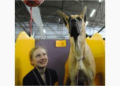 Behind the Scenes at the 2013 Westminster Dog Show