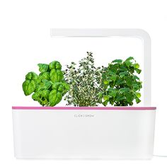 Click & Grow | Smart Herb Garden with a Pink Lid