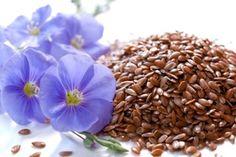 Accelerare il metabolismo e dimagrire assumendo in modo costante semi di lino