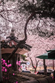 NomadVentura Cherry Blossom Korea Itinerary - A 14 day itinerary that offers the perfect introduction to the land of morning calm. Must-Vist Places in South Korea Gyeongju, South Korea Seoul, South Korea Travel, South Korea Photography, Seoul Photography, Nature Photography, Travel Photography, Art Asiatique, Aesthetic Japan