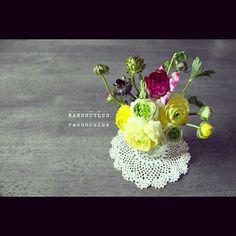 Ranunculus-Persian Buttercup