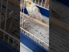Πρεμιέρα του Ρίκο - YouTube Parrot, Bird, Youtube, Animals, Parrot Bird, Animales, Animaux, Birds, Animal